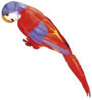 perroquet en plumes, perroquet de pirate, perroquet de décoration, accessoire pirate déguisement, accessoire hawaï déguisement, accessoire déguisement pirate, accessoire déguisement hawaï, faux perroquet Perroquet à Plumes, Rouge ou Vert