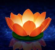 bougie flottante nymphea blanche, décorations à LED, décorations fêtes LED, décorations fausses fleurs magasin, acheter lanternes LED Bougie Flottante à LED, Nymphea Orange