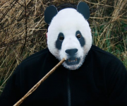 masque de panda, masque de déguisement, masque animaux, accessoire déguisement animaux, masque d'animal déguisement, masques d'animaux déguisement, se déguiser en animal Masque de Panda