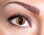 lentilles léopard, lentilles oranges de chat, lentilles halloween, lentilles fantaisie, lentilles déguisement, lentilles déguisement halloween, lentilles de couleur, lentilles fete, lentilles de contact déguisement, lentilles oeil de chat Lentilles Oeil de Chat, Leo Cat