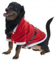 déguisement noel animaux, déguisement noel pour chien, déguisement père noel pour chat, déguisement père noel pour chien, déguisement pour chien noel, déguisement pour chat noel Déguisement de Père Noël, pour Chien