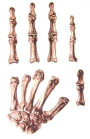 tatouage de main squelette, faux tatouages, tatouages de mains squelette, tatoos, tatouages temporaires halloween, faux tatouage squelette, faux tatouage halloween Tatouage de Main, Squelette