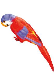 perroquet en plumes, perroquet de pirate, perroquet de décoration, accessoire pirate déguisement, accessoire hawaï déguisement, accessoire déguisement pirate, accessoire déguisement hawaï, faux perroquet, Perroquet à Plumes Rouges