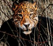 masque de léopard, masque de déguisement, masque animaux, accessoire déguisement animaux, masque d'animal déguisement, masques d'animaux déguisement, se déguiser en animal Masque de Léopard