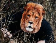 masque de lion, masque de déguisement, masque animaux, accessoire déguisement animaux, masque d'animal déguisement, masques d'animaux déguisement, se déguiser en animal Masque de Lion, en Carton