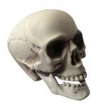 tête de mort décoration halloween, décos halloween, faux crâne halloween, tête de mort décoration, tête de mort halloween, tête de mort réaliste Faux Crâne, Tête de Mort, Taille Réelle, Articulée