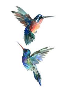 faux tatouages, faux tatouages oiseaux, tatouages temporaires oiseaux, Tatouages Temporaires, Colibris