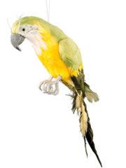faux perroquets, faux perroquets en plumes, faux oiseaux en plumes, perroquet de décoration, décorations tropicales, décorations Hawaï , perroquet de pirate Décoration Perroquet en Plumes, Jaune et Vert